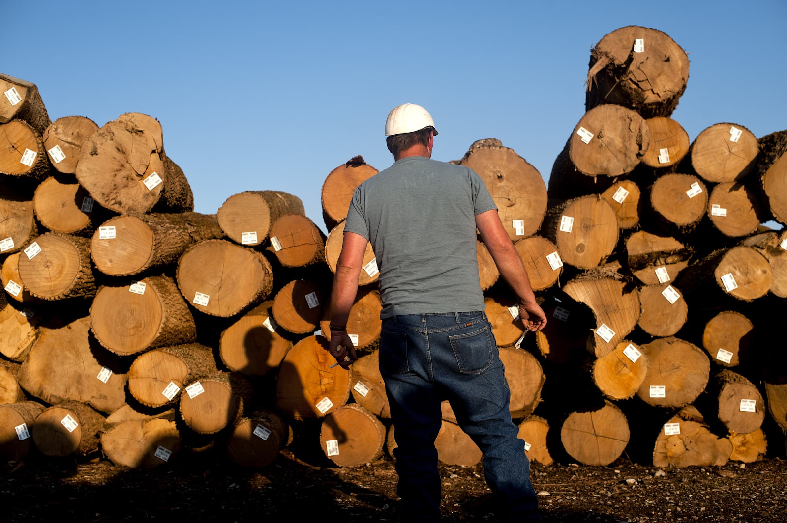 5 Tips to Buy Hardwood Logs for Commercial Use