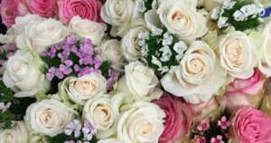 Five Facts About Roses